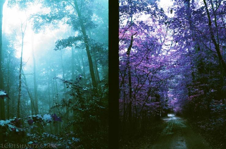 ldc_20161026_77790020ee3_lomo_purple_200