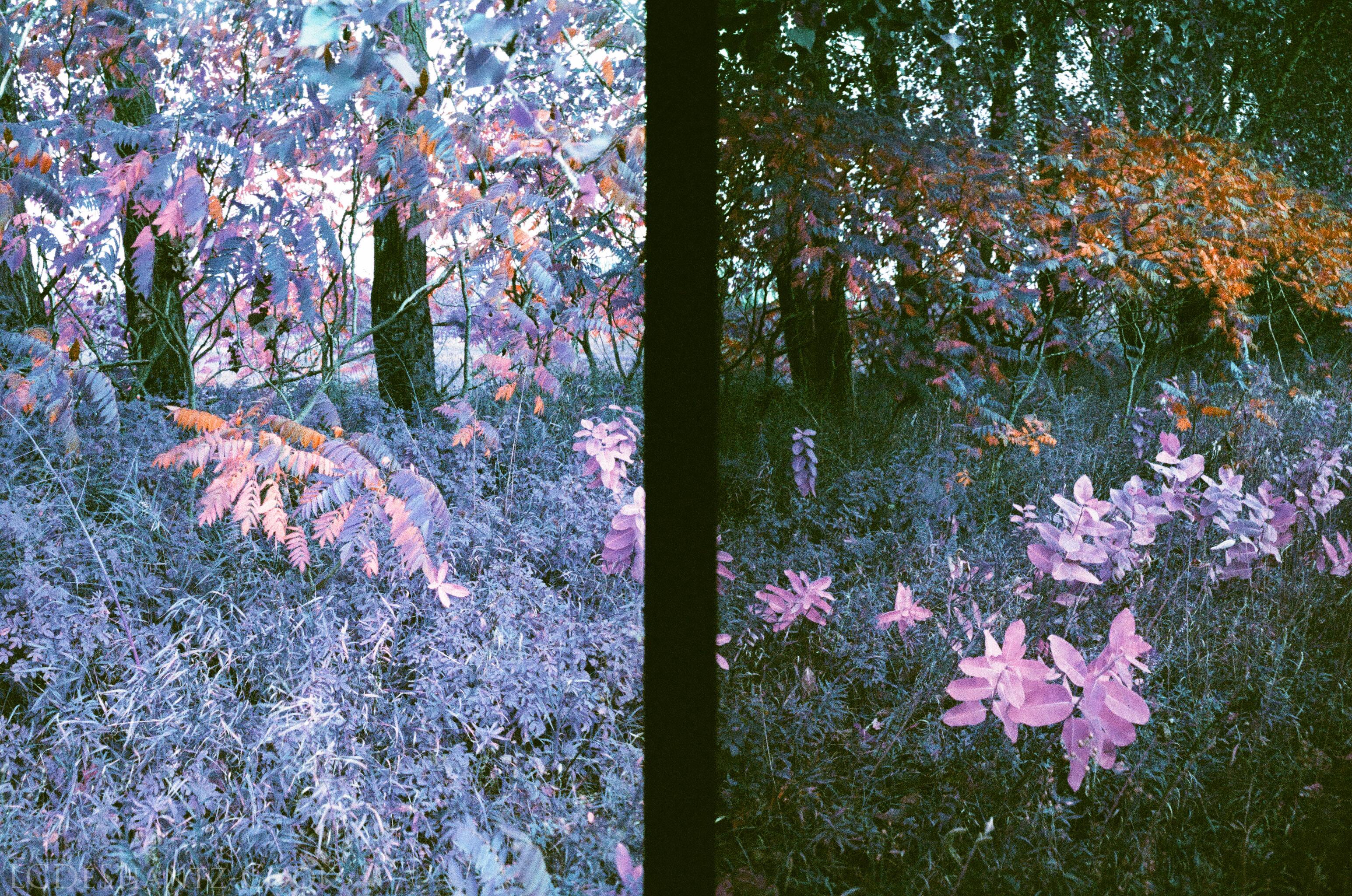 ldc_20161026_77790026ee3_lomo_purple_200