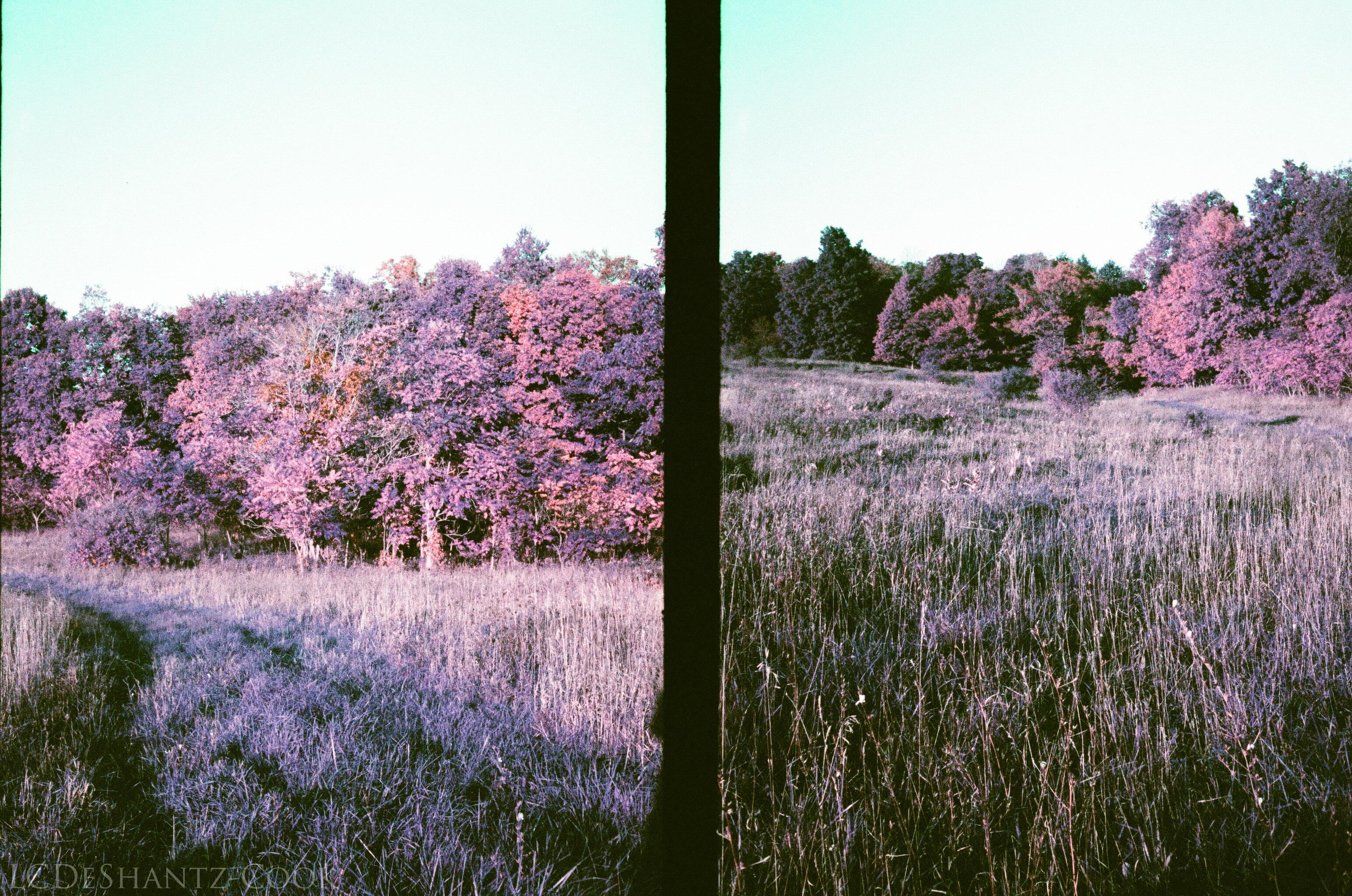 ldc_20161026_77790033ee3_lomo_purple_200