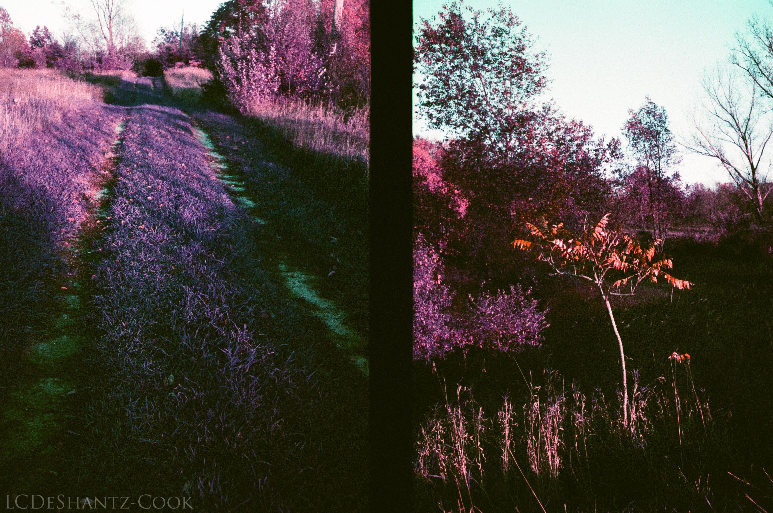 ldc_20161026_77790035ee3_lomo_purple_200