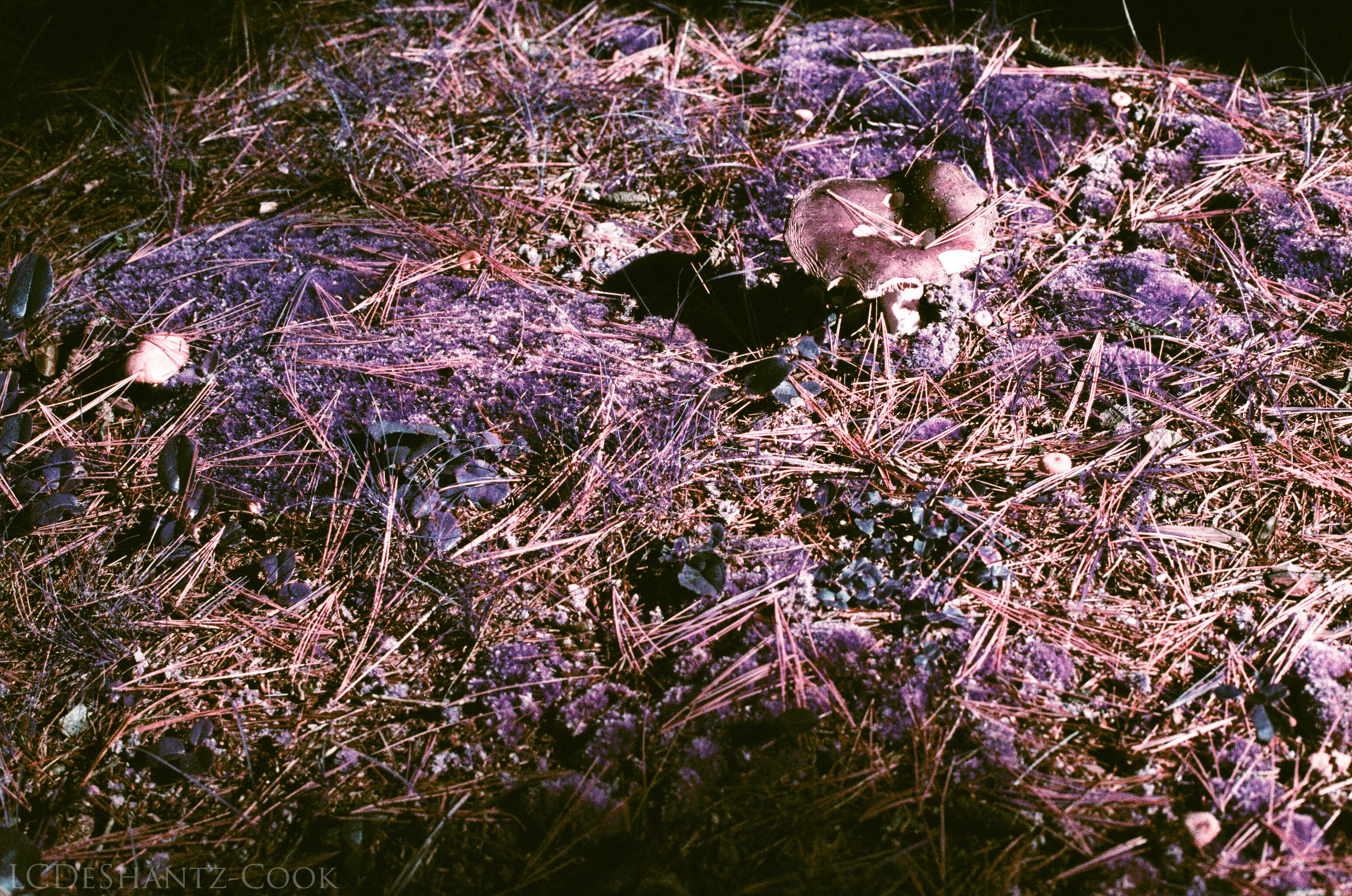 ldc_20161026_77800016srt102_lomo_purple_200