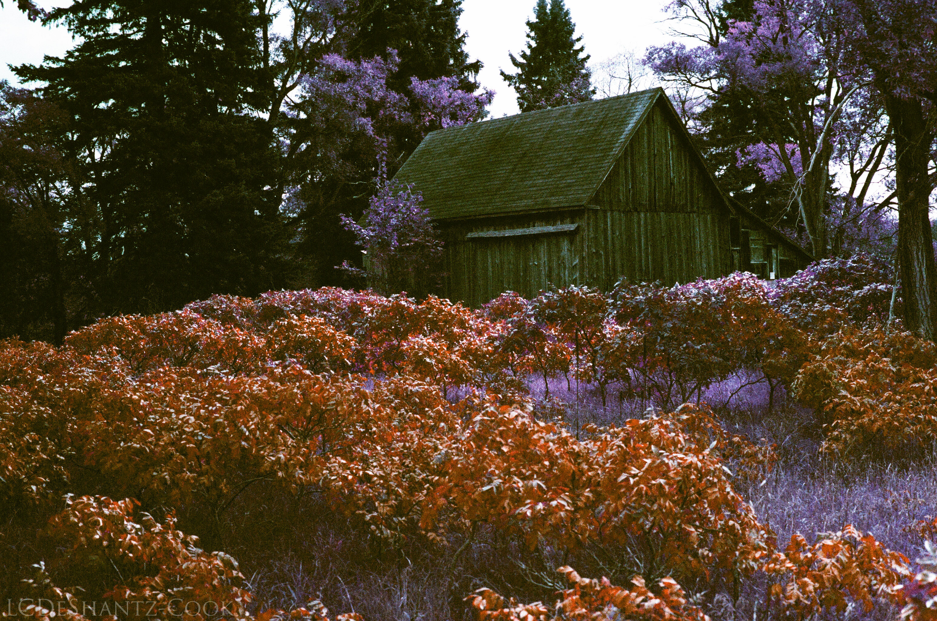 ldc_20161026_77800029srt102_lomo_purple_200
