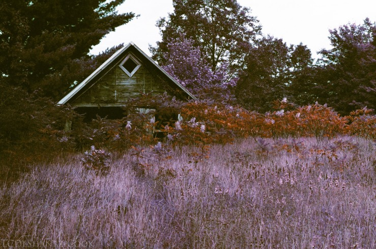 ldc_20161026_77800034srt102_lomo_purple_200