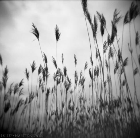 Marsh in metropark, Holga, Kodak T-Max 400