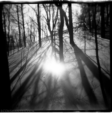 long shadows on the dune, Fuji Acros and Holga