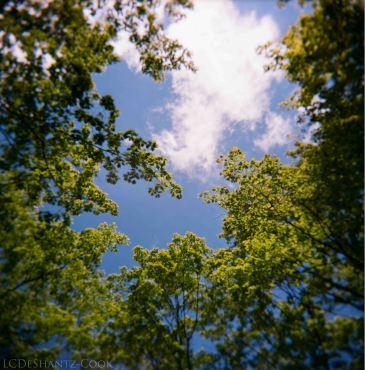 Holga, trees and sky