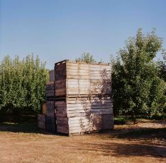apple orchard in west Michigan, Bronica SQ-A, Lomography 100