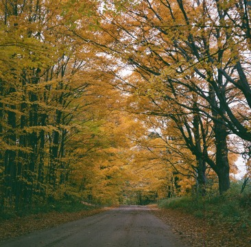 fall, backroad in west Michigan, Mamiya C220 and Lomography f2 film